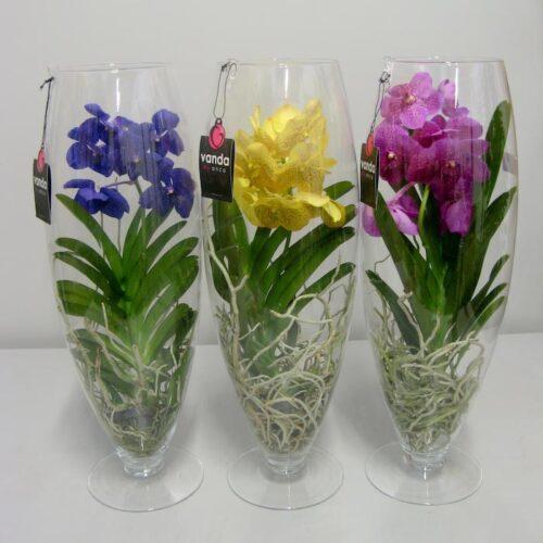 орхидея ванда в стекле